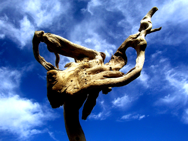 driftwood blue sky white clouds