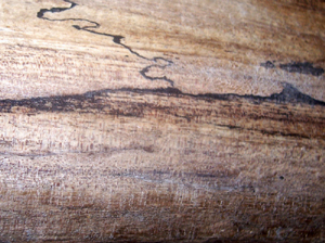 natural landscape on tiny area of driftwood