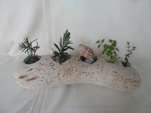 driftwood with drilled holes and herbs