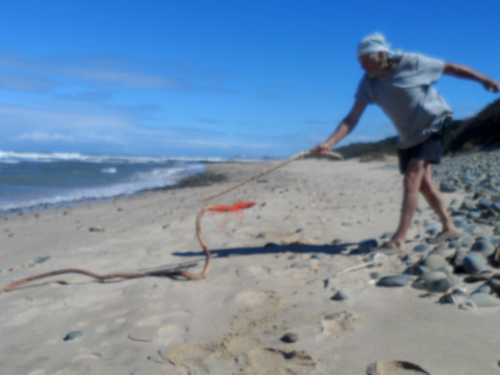 driftwood snake on the beach