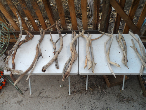 twenty pieces of driftwood on two tables