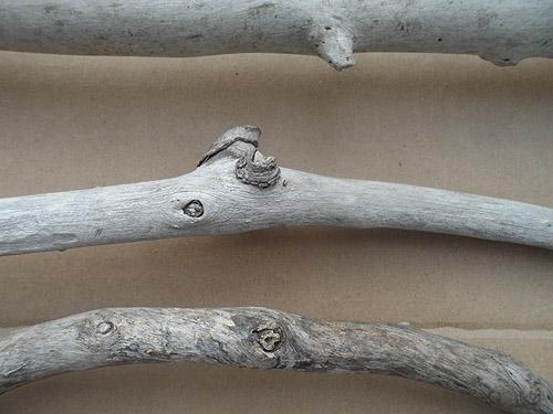 driftwood lot 150119E - close up interesting