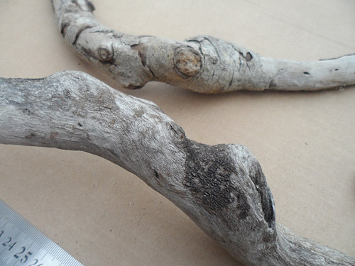 driftwood lot 230119C - twists and bumps